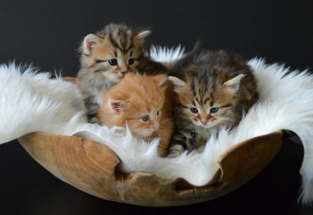 3 kittens 10-06-2020