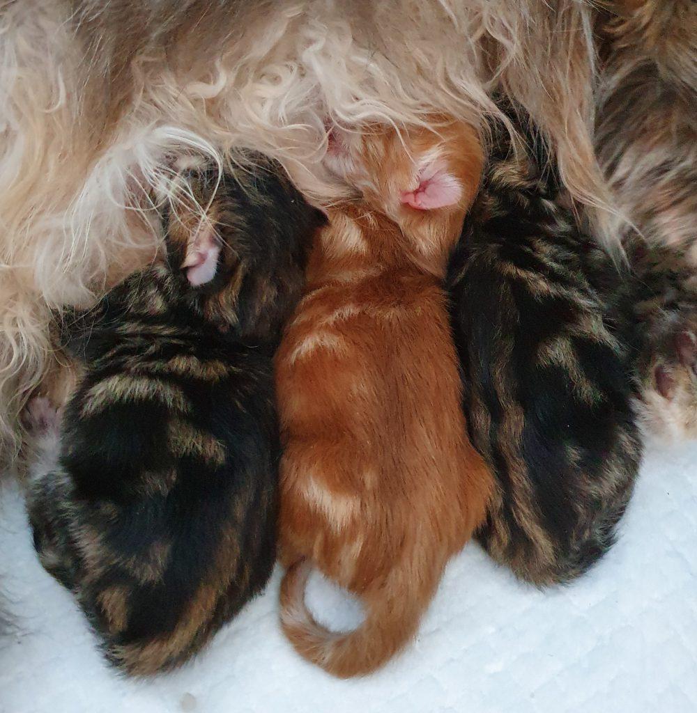 Kittens van Bublinka 13052020
